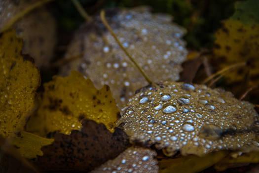 October rain III