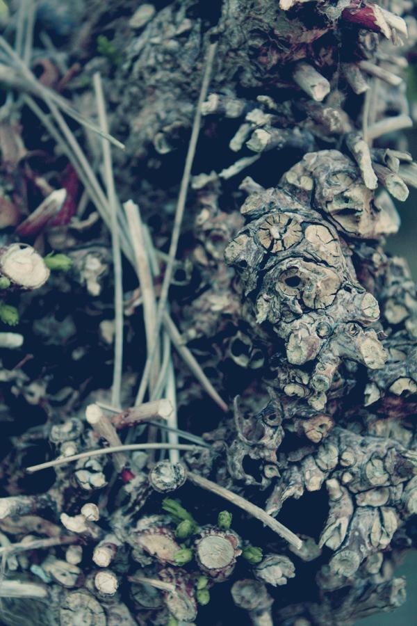 http://fc02.deviantart.net/fs42/f/2009/104/4/d/Summer_comes___wood_by_Ayaka_Itoe.jpg