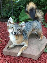 Kilo the Poseable Softmount fox