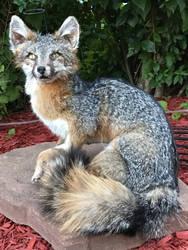Kilo the Posable Softmount Fox