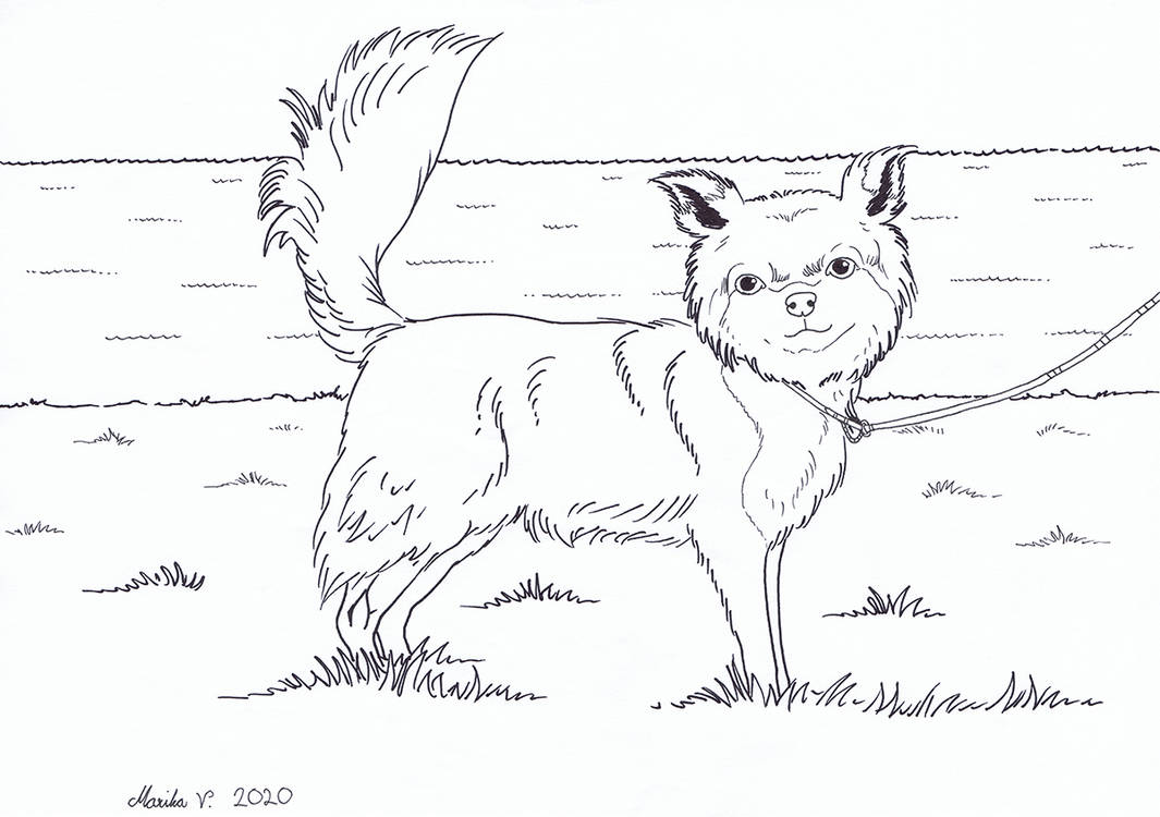 Colouring Picture - Chihuahua