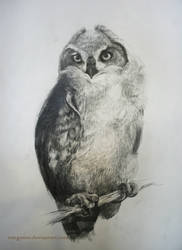 Owl with Pencil