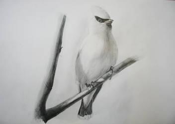 Super-Unknow bird ?