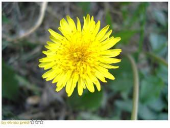 flower by elvisiapresli