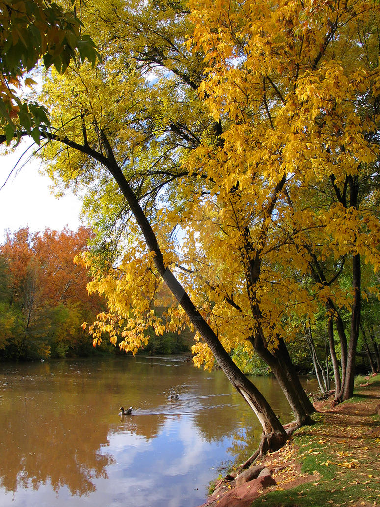 Oak Creek by starbearvisions