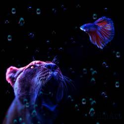 lionfishIG msolat