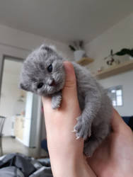 LITTLE KITTY by BOHEMIAWILDSHADOW