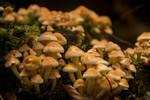 Autumn by jellemartijn