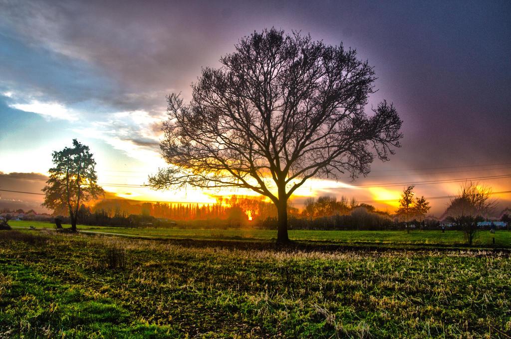 Tree3 by jellemartijn