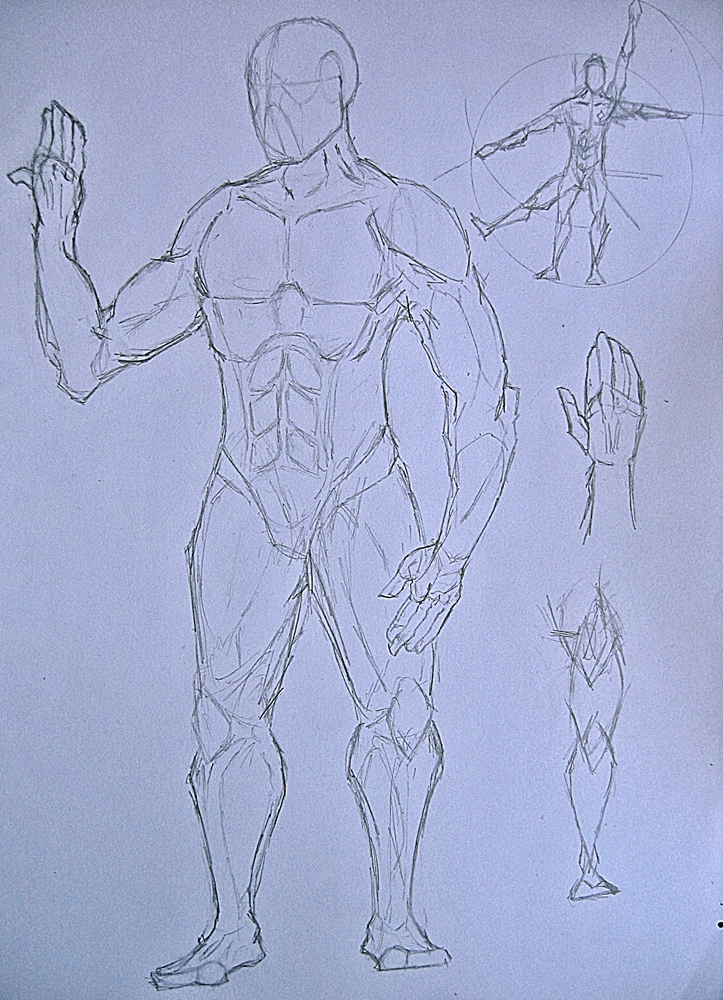 Anatomy Sketch by BLITZFenix