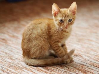 Little kitty by ChuPska