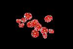 RedFlowers 1