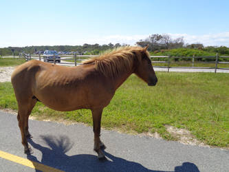Pony of Assateague Island by LynxiShakes