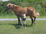 Mama and Baby - Ponies of Assateague Island by LynxiShakes