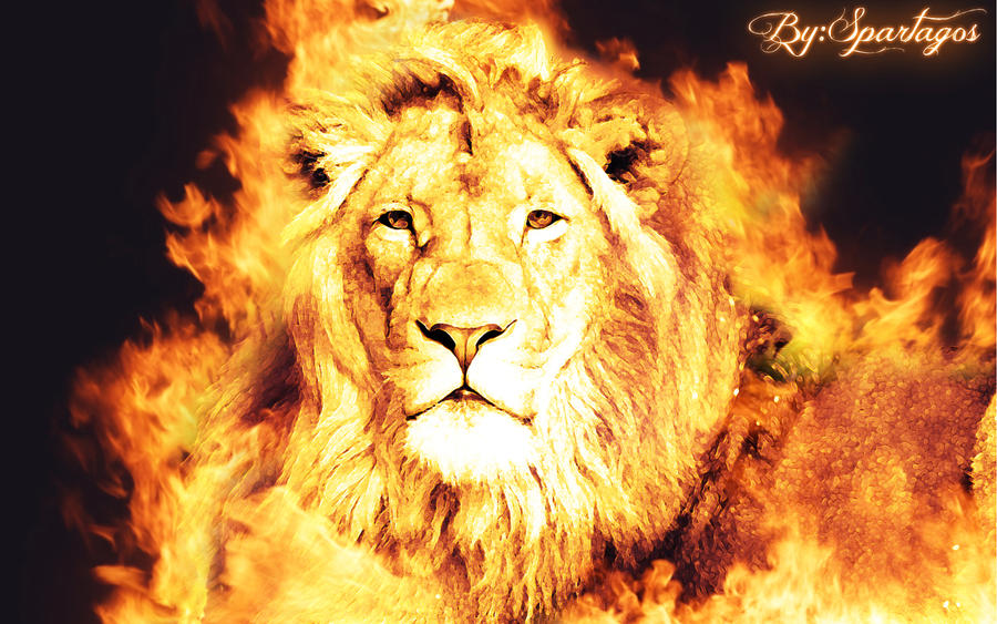 Fire Lion Images & Pictures - Becuo