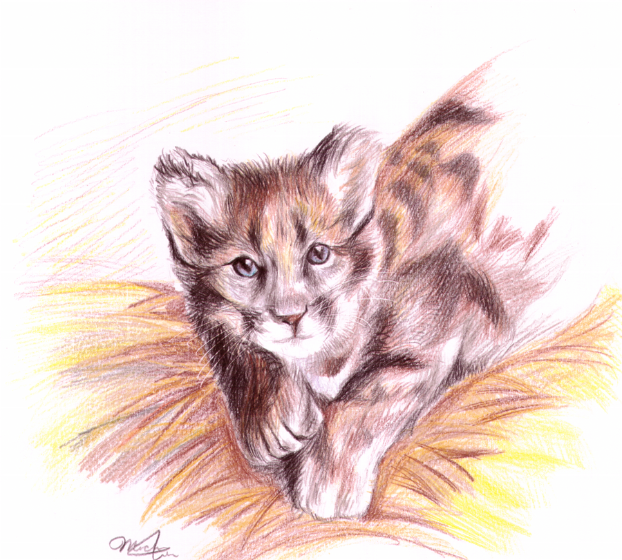 Baby Cougar by Cafe-Chaos on DeviantArt