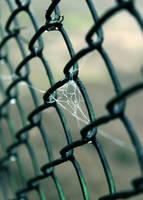 Wet Net by WhiteEyedFrog