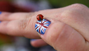 A British Ladybird