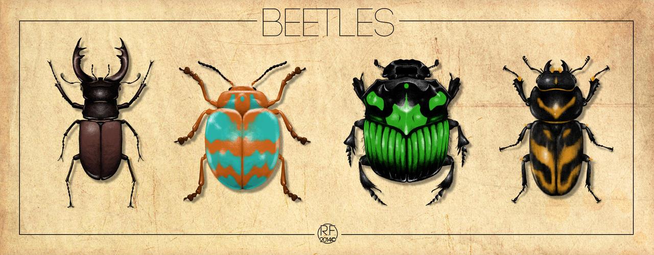 Beetles by Pandaphobia