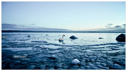 Winter survival by Th3Un1qu3