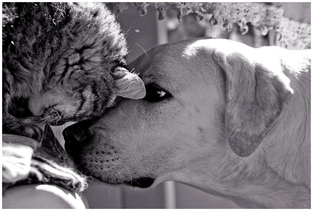 Friends by d1kobraz