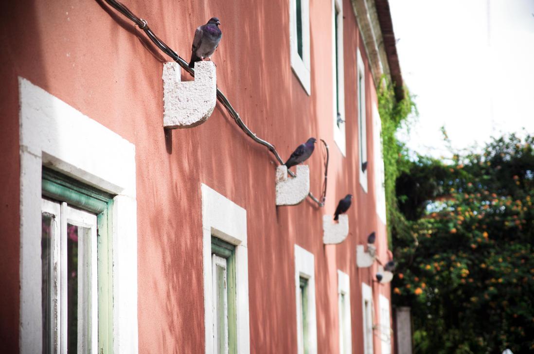 Pigeons in Lisbon by d1kobraz