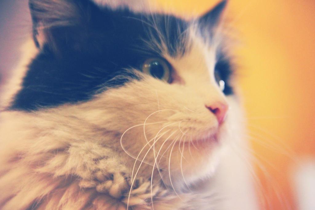 Kitty by Crusaide-Nino