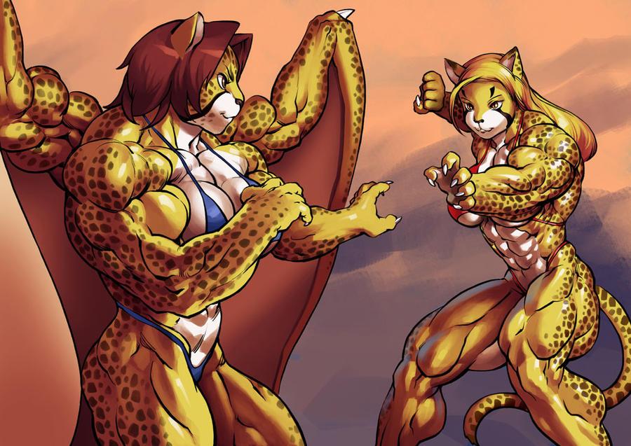 Cat fight by Pokkuti
