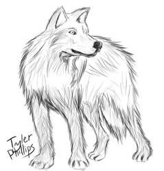 Wolf - Quick Sketch by ulrich5000