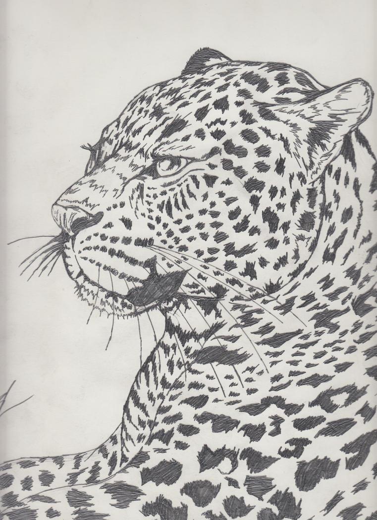 Leopard Pencil Drawings leopard pencil drawing...