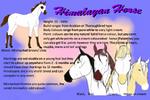 Himalayan Horse - New Breed