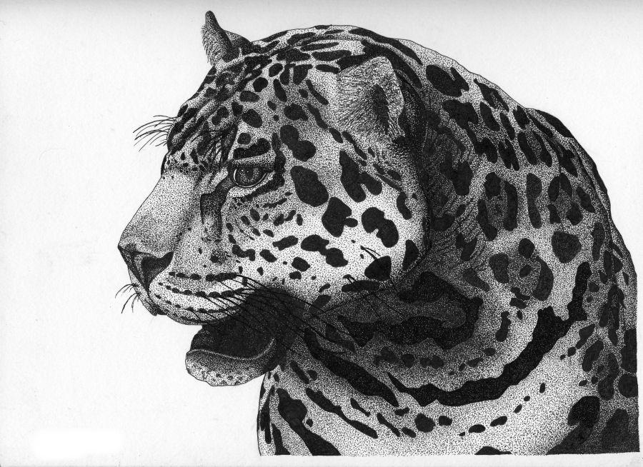 Jaguar Pen and Ink by LeoEyes on DeviantArt