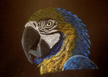Parrot by Ptero-Pterodactylus