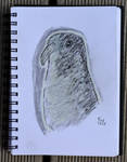 Bird (Junior) by Ptero-Pterodactylus