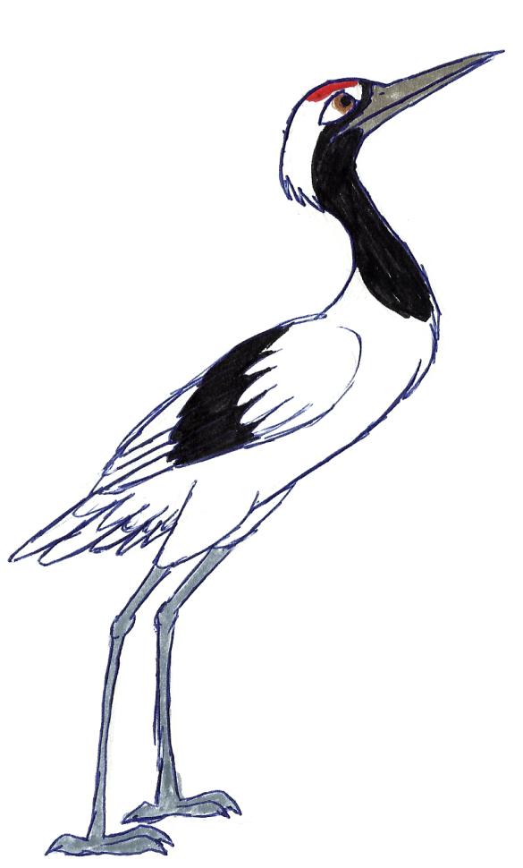 Japanese crane drawing