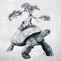 Tortoise Tree - Growth