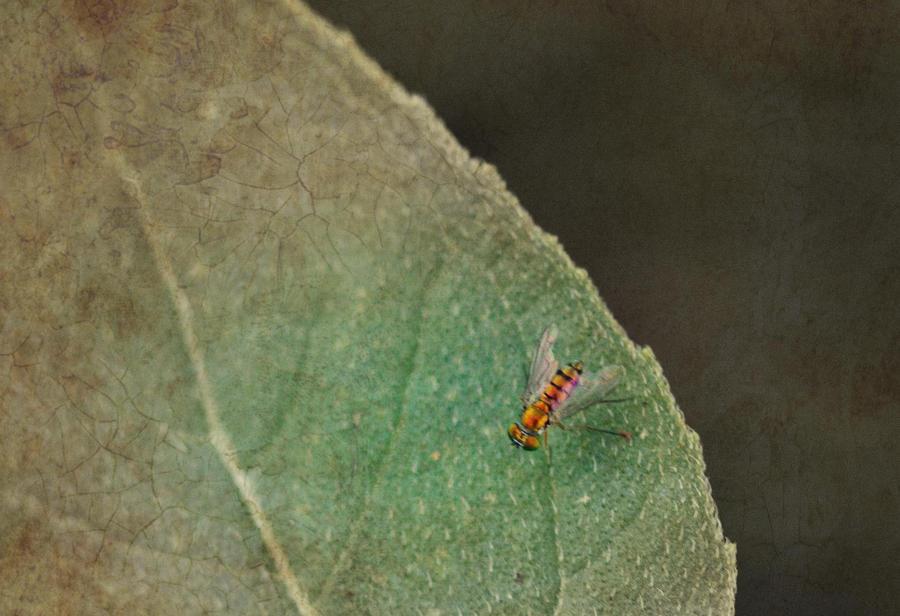 Leaf traveling..... by Sherjaxon