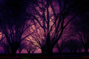 Purple Haze Trees by Shyll-j