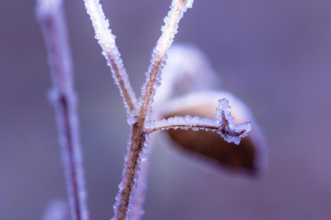 Iceflowers  04 by Shyll-j