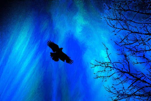 Midnight Blue Flight
