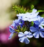 Flower Power 9361