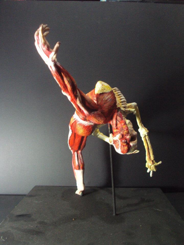 Desollado humano frontal by tabypark46