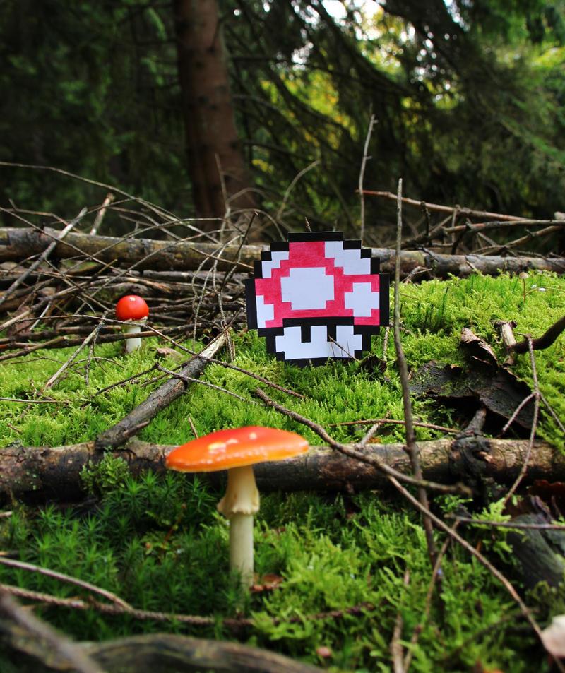 Walk in the forest... by S04-Joker