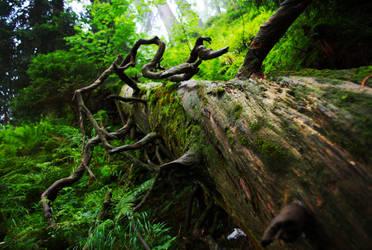 Old Forest by Vefantur