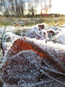 Frost in Sunshine