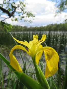 Yellow by Lake