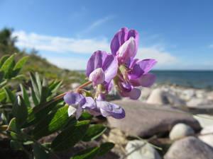 Violet on Beach