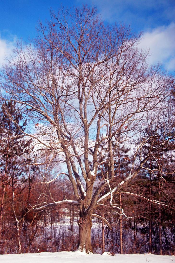 Snow Tree. by AlchemyOtaku17