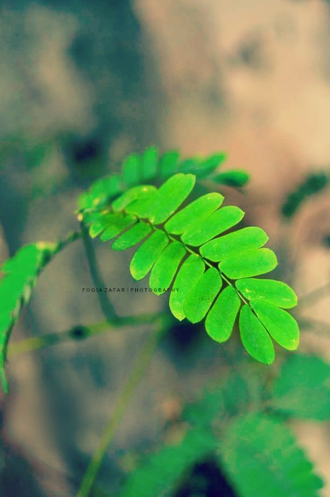 Out of difficulties grow miracles. by foqiazafar