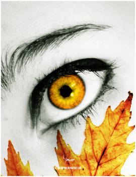Autumn through my sight..